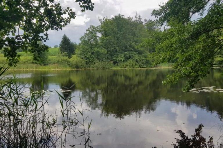 Petelinjski ribniki