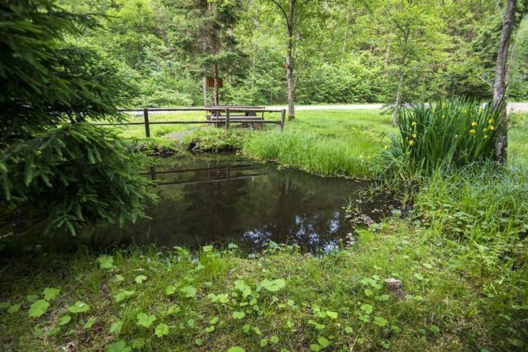 Naravni park Bistra